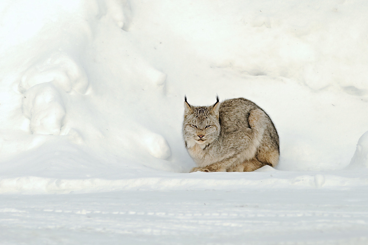 Photography Tucked Into the Snowbank by Marc Brisson