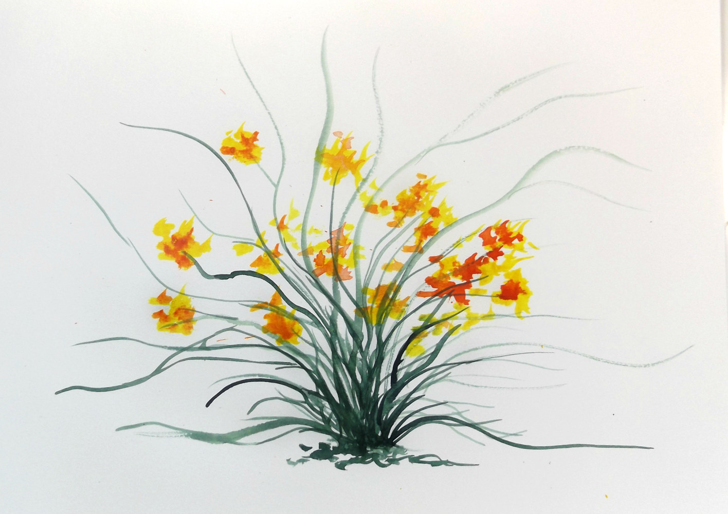 Drawing Floral 2 by David Neace