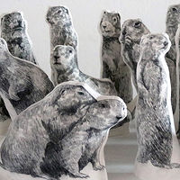 The 11th Avenue Gophers by Belinda Harrow