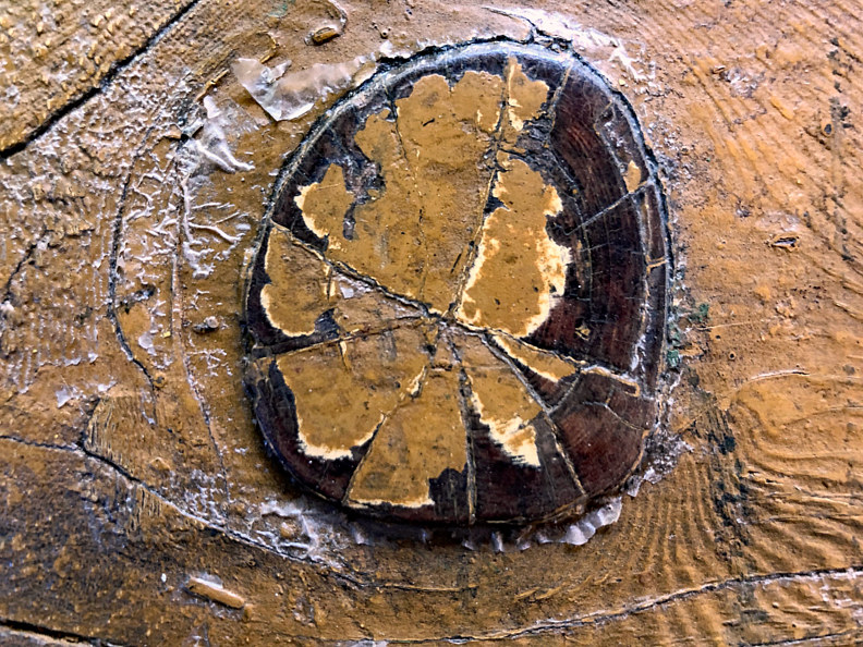 IMG_0537 Petrified wood macro by Richard  Ashby