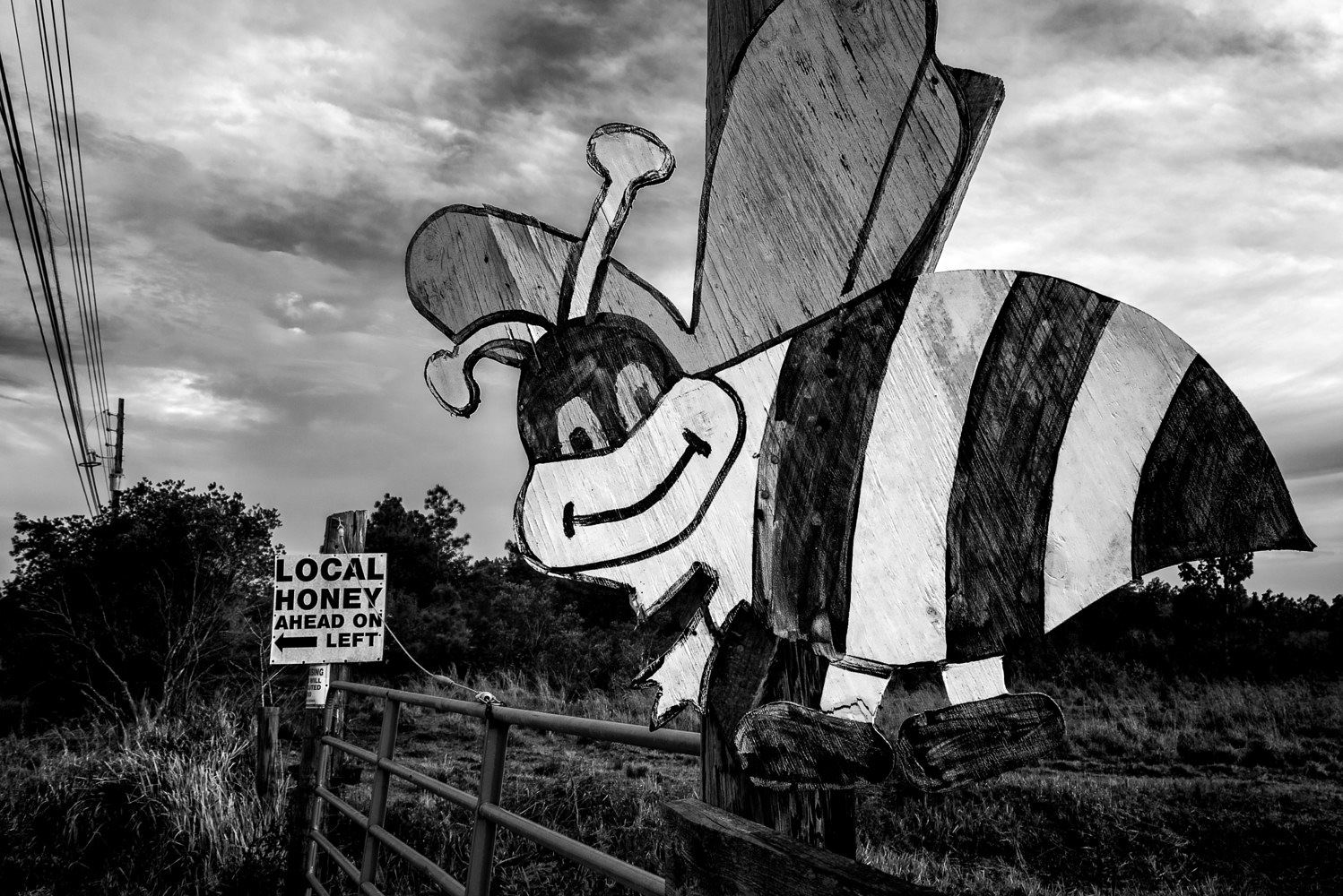 Honey Bee _ SR 520 (PL46_6842BW) by Gary Jones