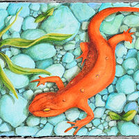 Watercolor Red Eft by Lisa  Baechtle