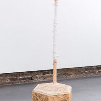 Untitled (Stump Noël) by Magali Hebert-Huot