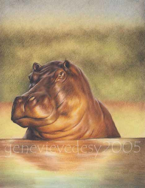 Dessin d'hippopotame, 2005  by Genevieve Desy
