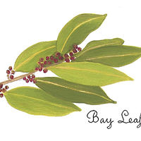 Bay Leaf by Susan Lynch