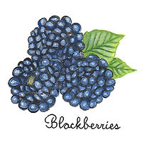 Blackberries by Susan Lynch