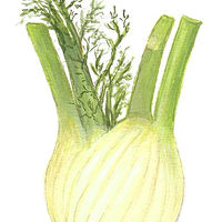 Fennel by Susan Lynch