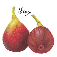 Figs by Susan Lynch