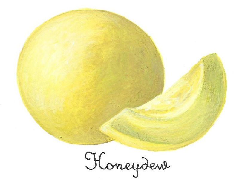 Honeydew by Susan Lynch