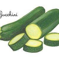 Zucchini by Susan Lynch