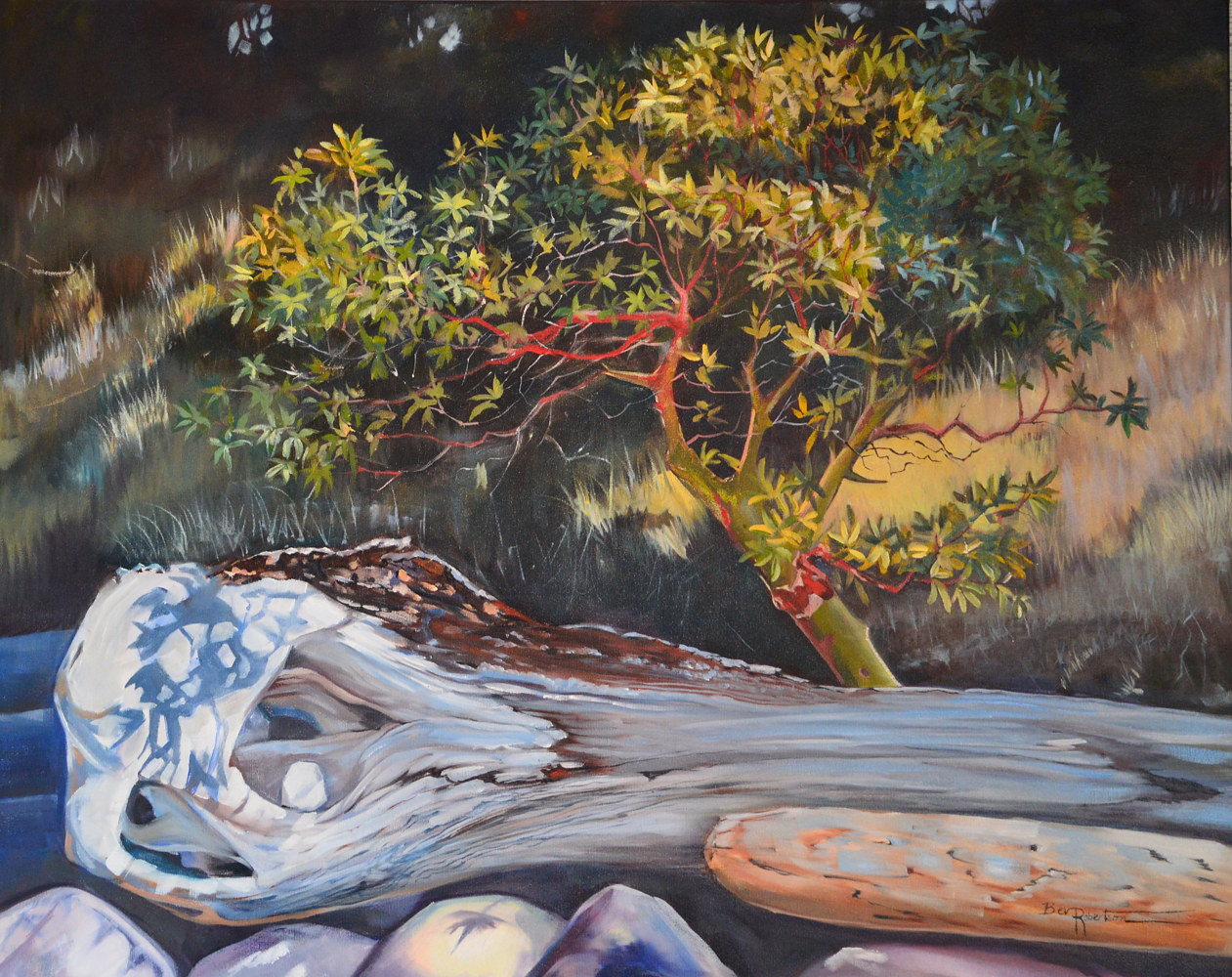 Oil painting Bev Robertson-oil on canvas-Little Madrona 201813 by Bev Robertson