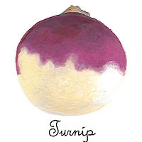Turnip by Susan Lynch