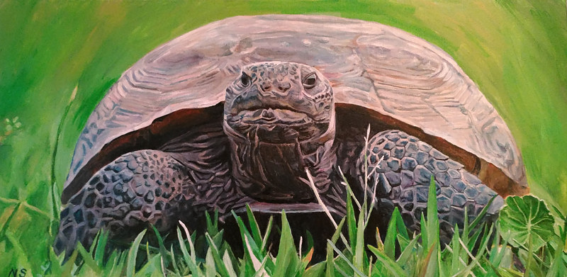 Painting Gopher Tortoise by Nancy Sharp