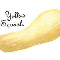 Yellow Squash by Susan Lynch