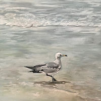 Oil painting Seagull  on the seashore by Timothy Innamorato