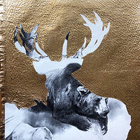 Drawing Stag  by Laine Godsey