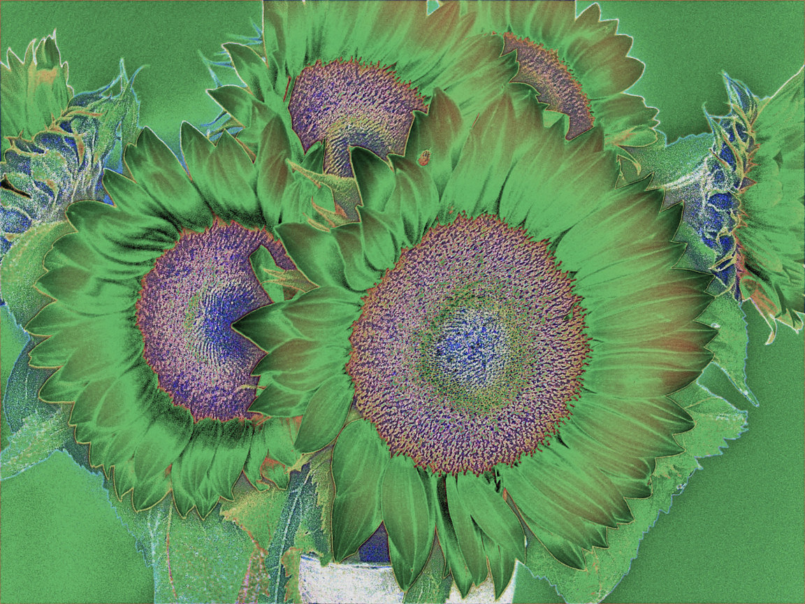 GREEN SUNFLOWER  by Joeann Edmonds-Matthew