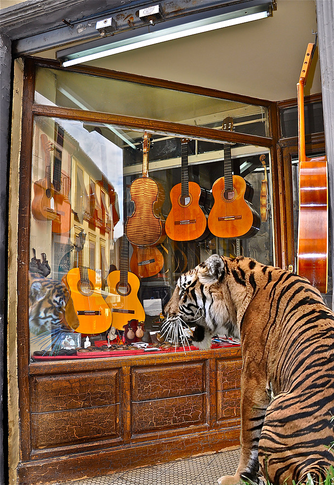 WINDOW SHOPPING FOR A TIGER VIOLIN by Joeann Edmonds-Matthew