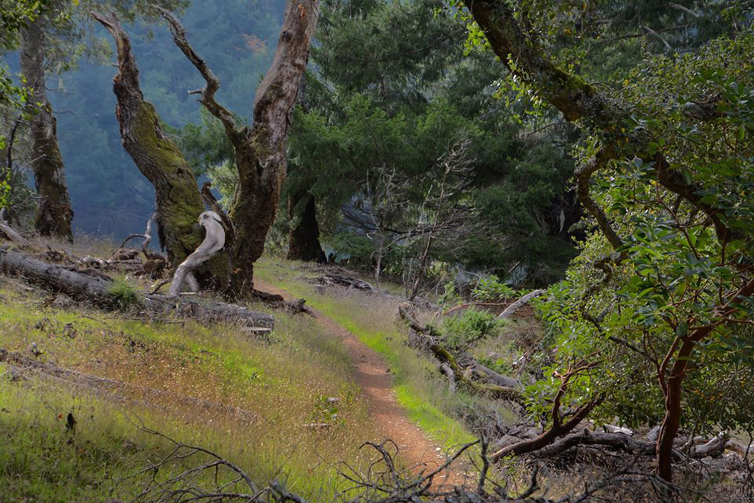 ALONG THE PATH jpg by Joeann Edmonds-Matthew