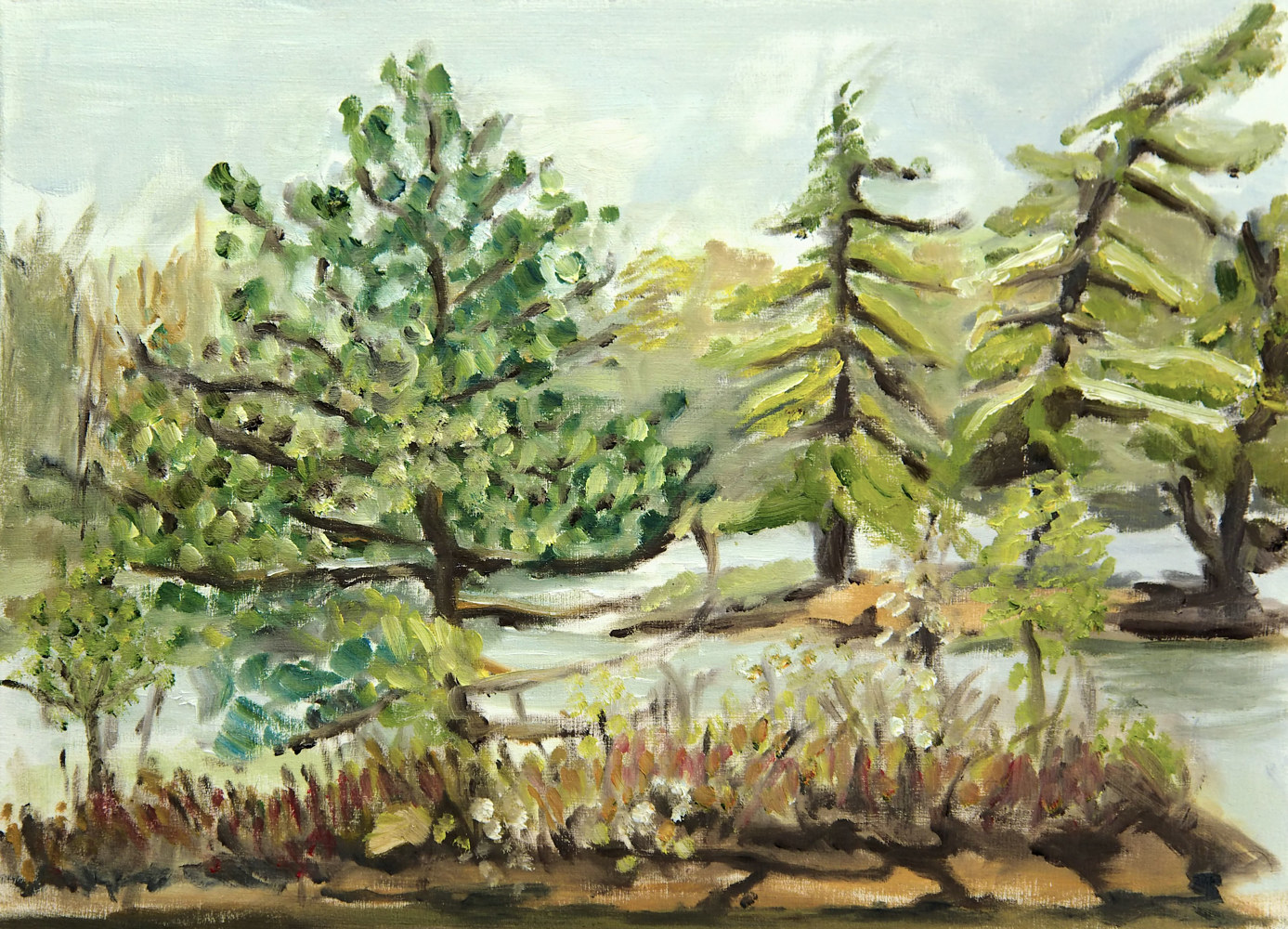 Oil painting White Pine at Lake  Kasshabog by Marc Brisson