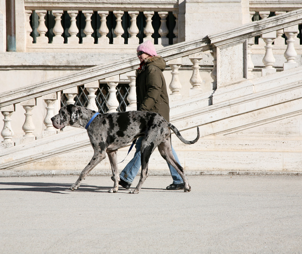 Locals. Villa Borghese Park. Rome, Italy. (2008) by Mike Steinhauer