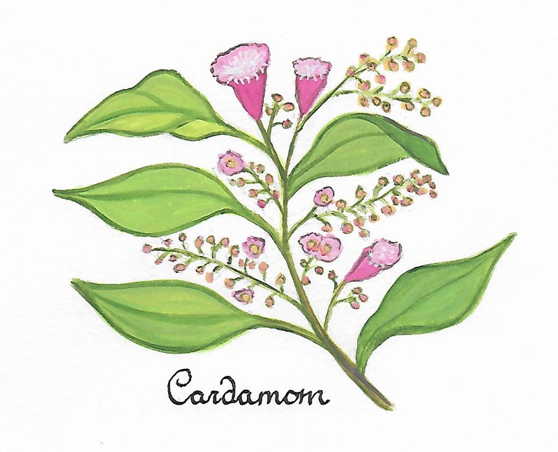 cardamom by Susan Lynch