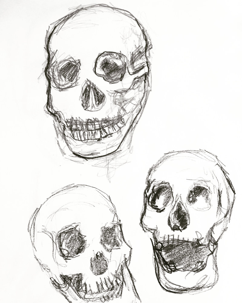 Drawing 2019 study sketch - skulls 1 by Barb Martel