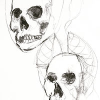 Drawing 2019 study sketch - skulls 2 by Barb Martel