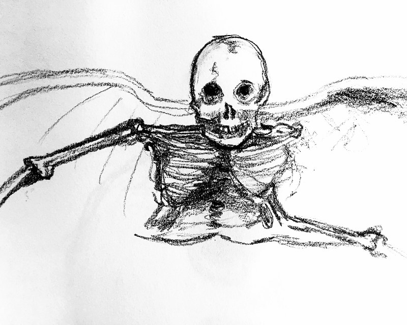 Drawing 2019 study sketch - skeleton 1 by Darcy Martel
