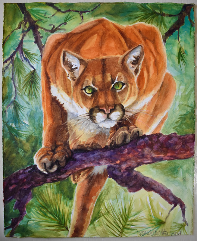 Watercolor Mountain Lion by Lisa  Baechtle