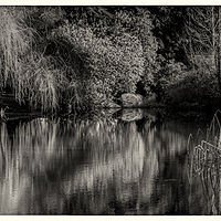 CCCC3198 Pond B&W #1 by Jim Friesen