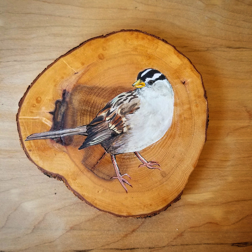 White crowned Sparrow by Nicole Walters