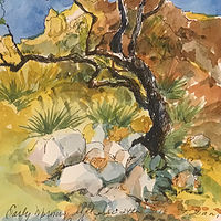 Moments...Catalina Foothills  by Wanda Hawse