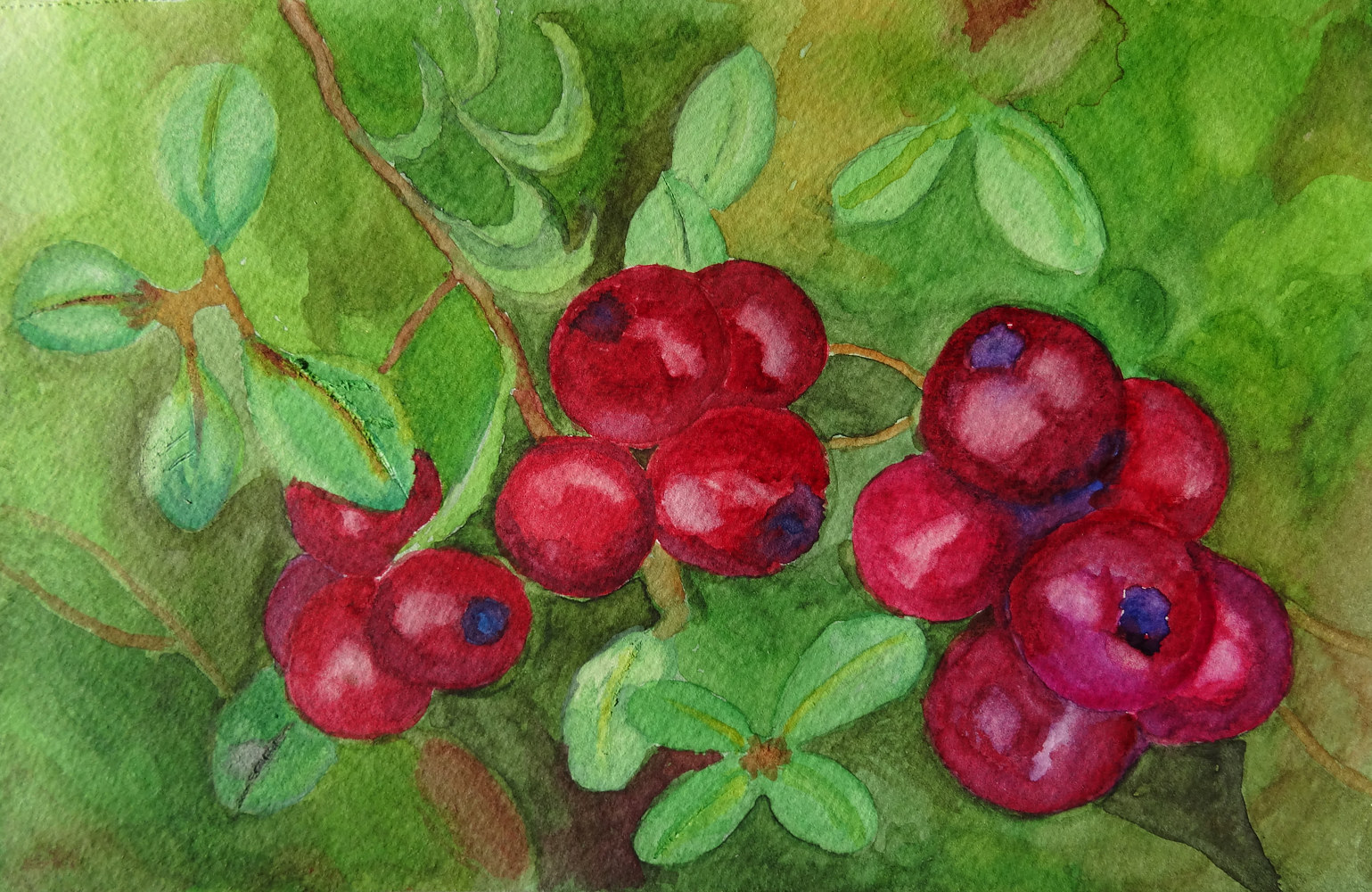 Watercolor Cranberry Bog by Joan Morris