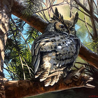 Painting Horned Owl- Shoulder Check, 11x14, Oil by Bryan  Coombes