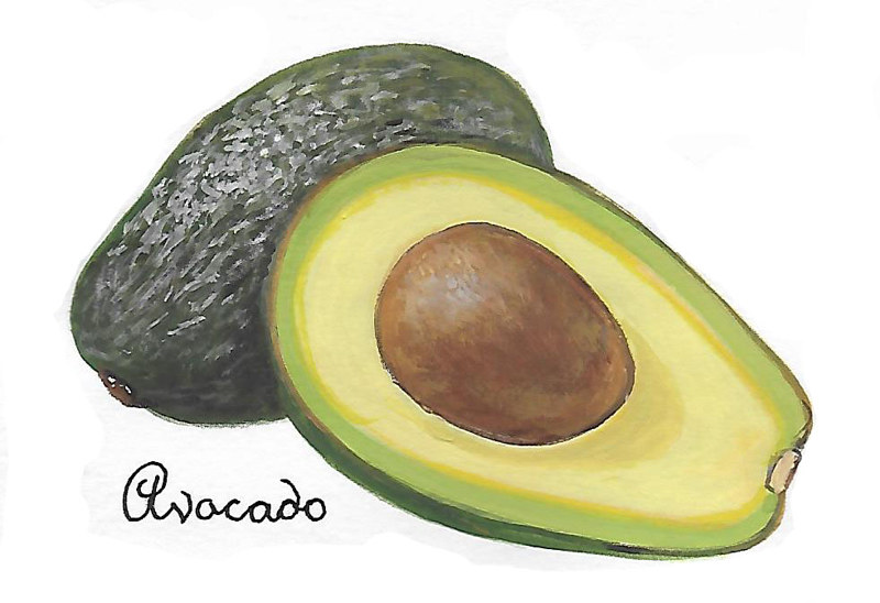 Avocado by Susan Lynch