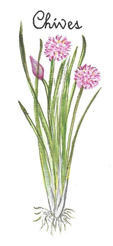 Chives by Susan Lynch