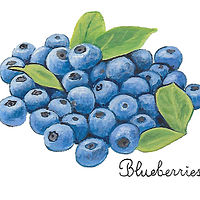 blueberries by Susan Lynch