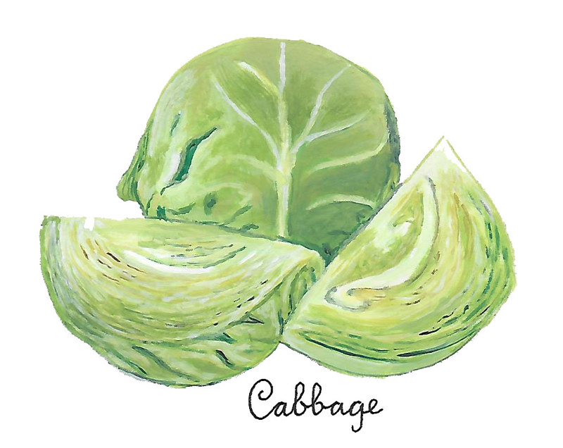 Cabbage by Susan Lynch