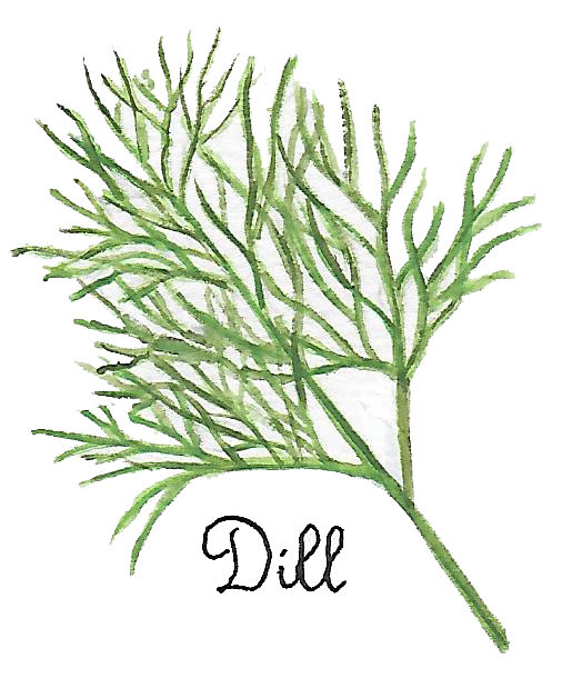 dill by Susan Lynch