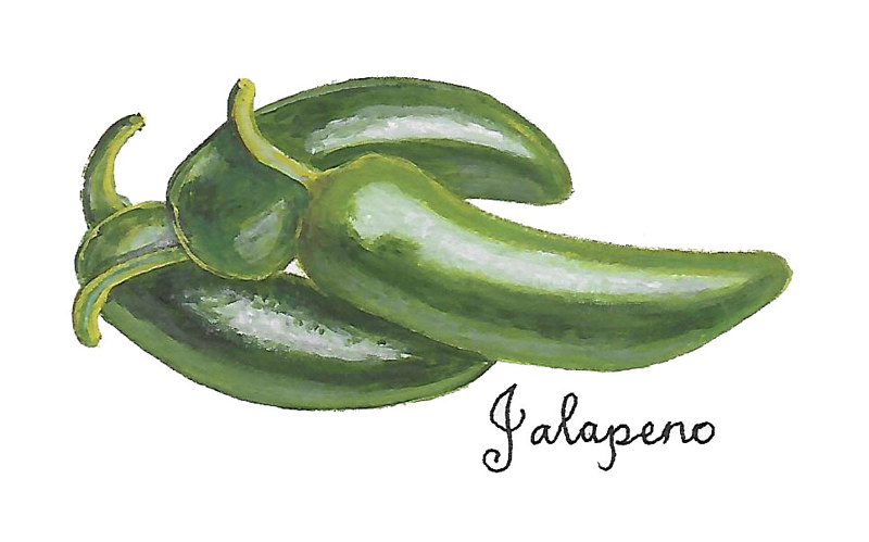 Jalapeno by Susan Lynch
