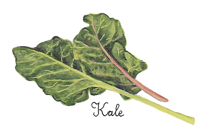 Kale by Susan Lynch