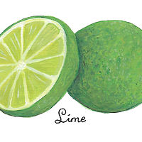 Lime by Susan Lynch