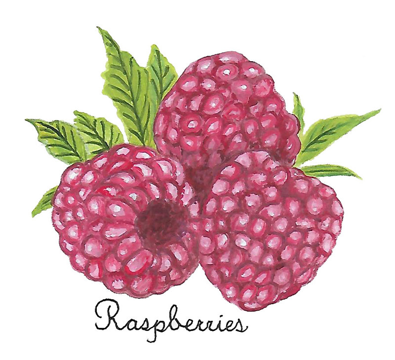 Raspberries by Susan Lynch