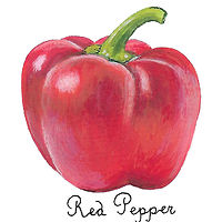 red pepper by Susan Lynch