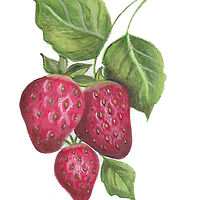 strawberries by Susan Lynch