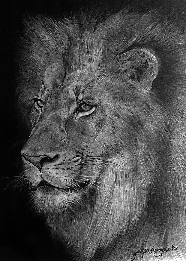 Drawing The Pride by Dianne Jane Gupta