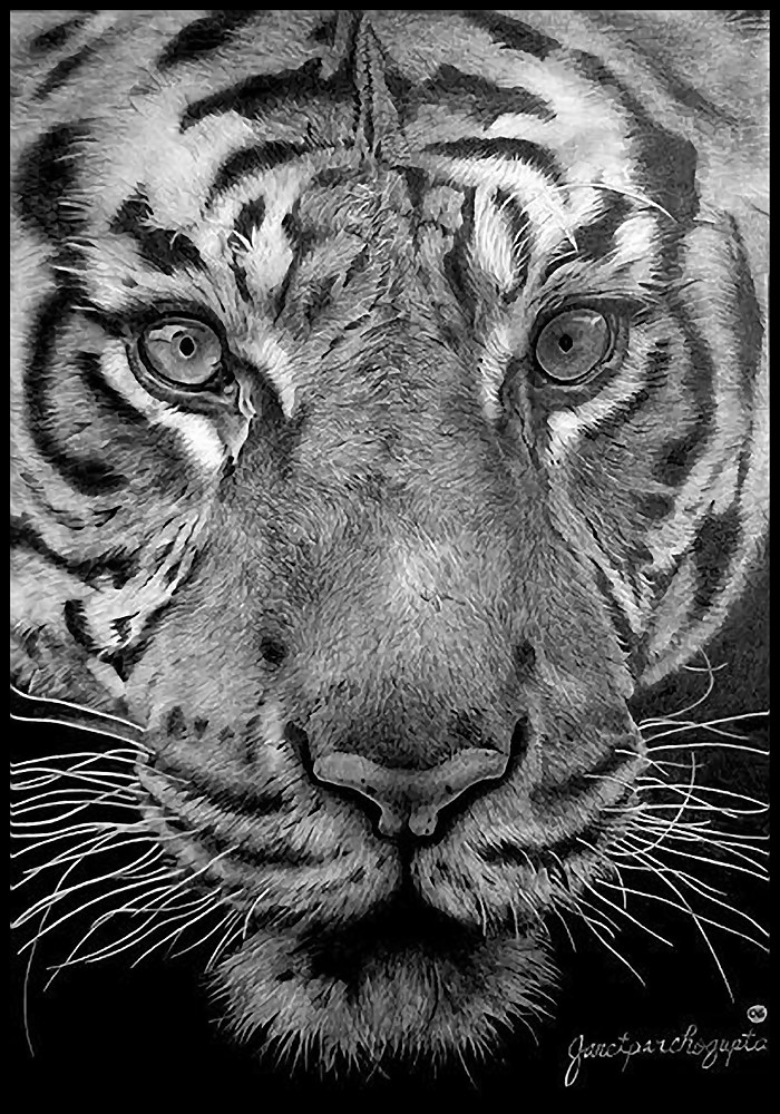Drawing Predator's Stare by Dianne Jane Gupta