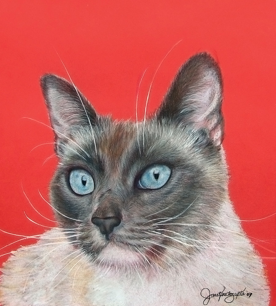 Prismacolor drawing on a Siamese cat on colored acid free paper. by Dianne Jane Gupta