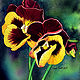Painting Yellow & Maroon Pansy by Dianne Jane Gupta